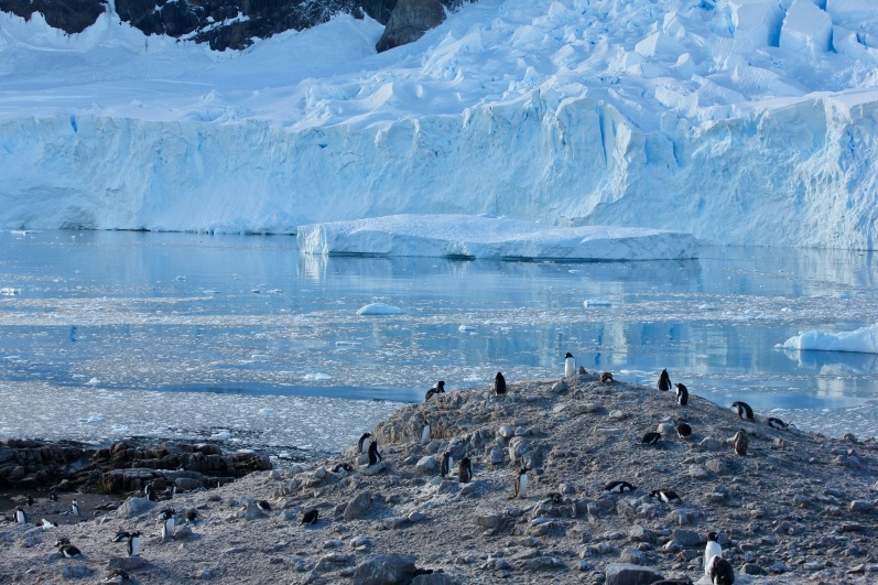 An actively calving glacier treated us to awe-inspiring sounds.